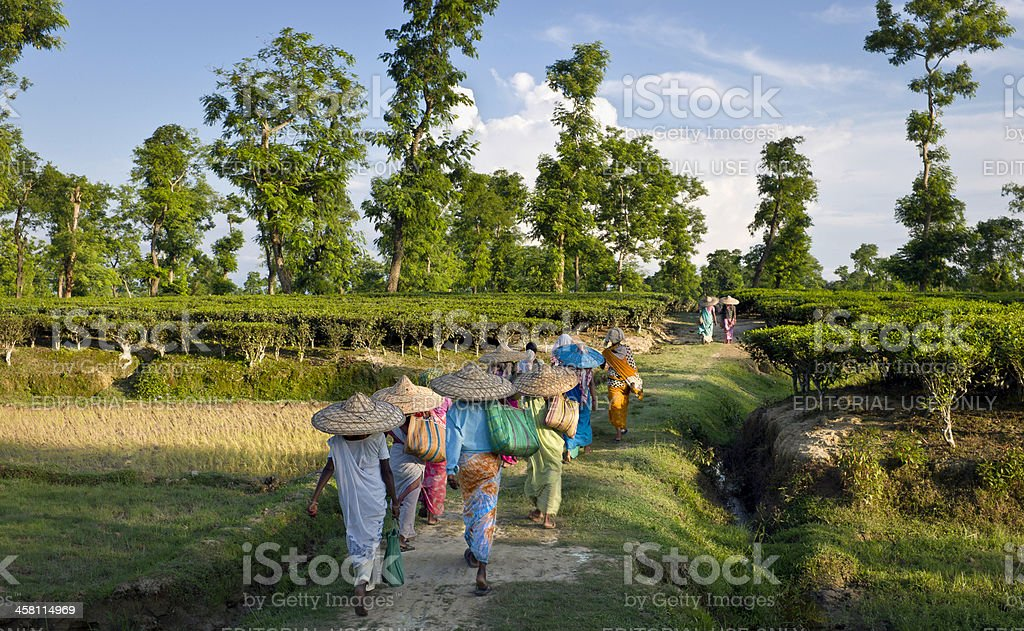 Tea pickers returning after a day's work, Jorhat, Assam, India stock photo
