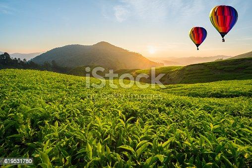 istock Tea plantation at Cameron highlands with hot air balloon 619531780