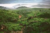 Tea plantation in Munnar, Kerala  in fog at dawn