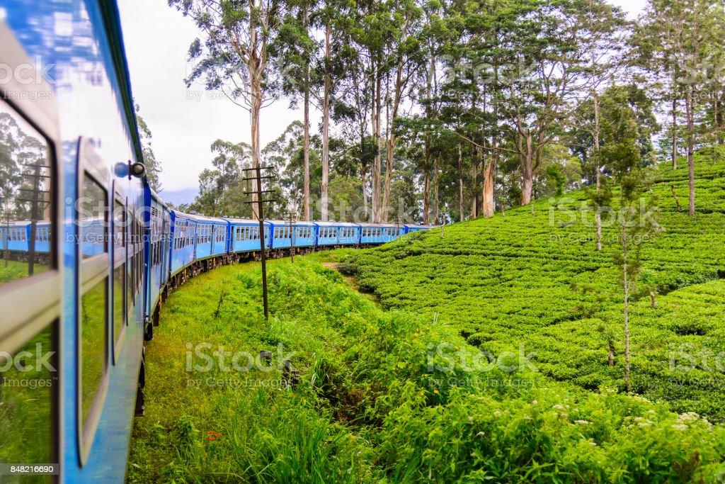 Tea plantation in Nuwara Eliya district, Sri Lanka stock photo