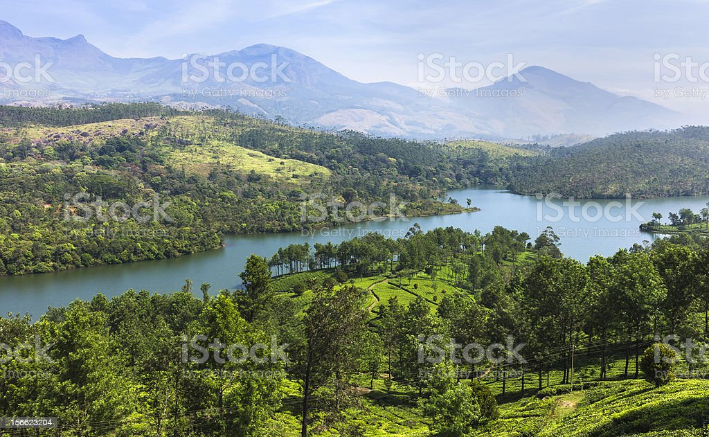 Tea plantation, Kannan Devan Hills, Munnar, Kerala, India. royalty-free stock photo