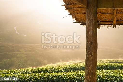 Tea plantations on the mountains with light morning sun caused the fog faded beautiful Doi Ang Khang, Chiang Mai, Thailand.