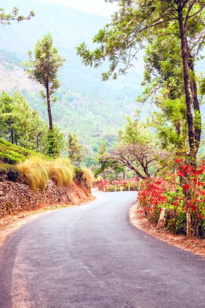 Tea plantation road of Kerala State stock photo