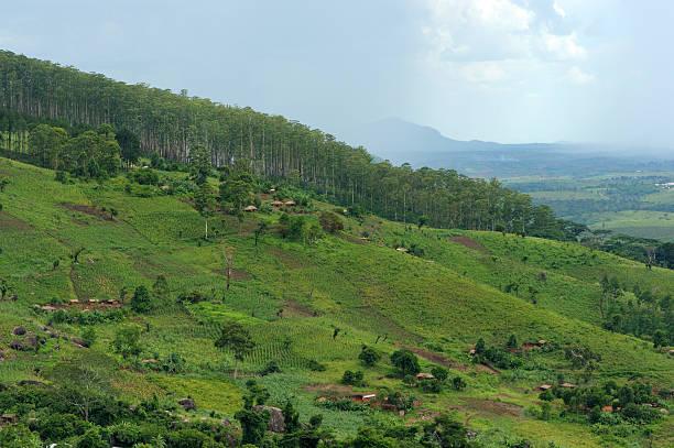 Tea plantations and hills, Mozambique stock photo