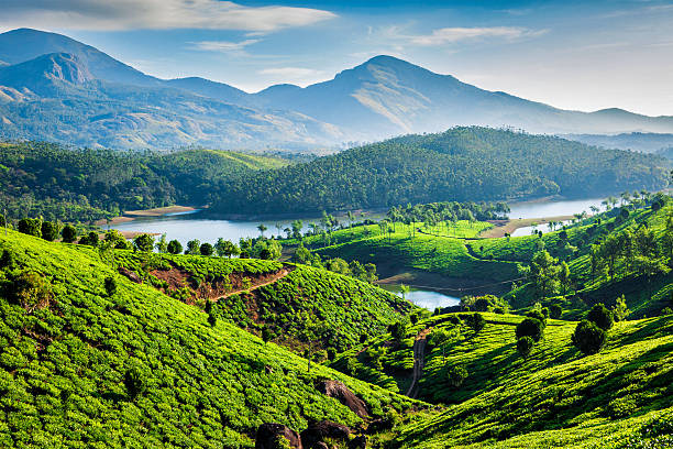 Tea plantations and river in hills. Kerala, India stock photo