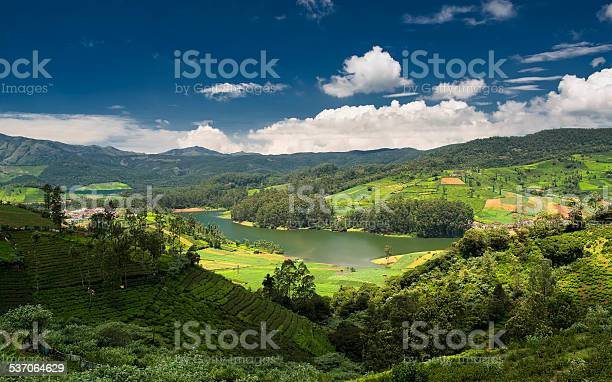 Tea Plantations Around The Emerald Lake In Ooty Stock Photo - Download Image Now