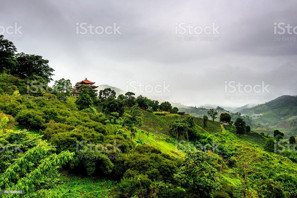 Tea plantations - Doi Mae Salong, Thailand foto royalty-free