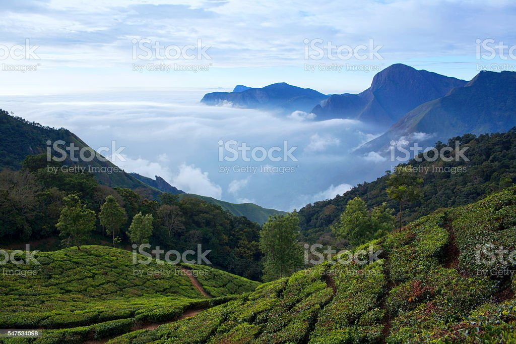 Tea plantations in Munnar, Kerala, India stock photo