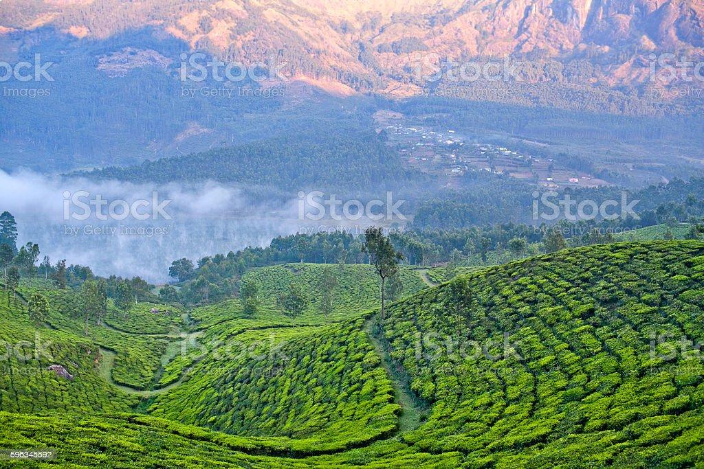 Teeplantagen in Munnar, Kerala, Indien Lizenzfreies stock-foto