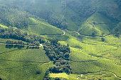 Paths wind through tea plantations in Munnar