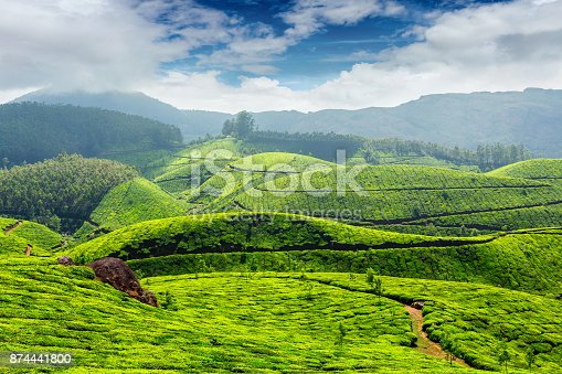 Tea plantations in morning fog in Munnar, Kerala, India
