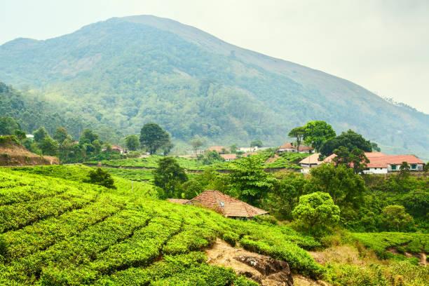 Tea plantations of India stock photo