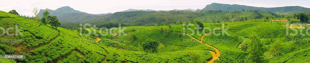 Tea Plantations of Sri Lanka stock photo