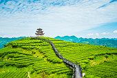 istock Tea plantations 1160316337