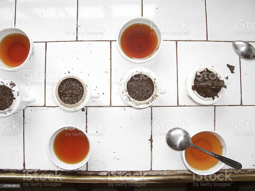 Tea tasting in a plantation royalty-free stock photo