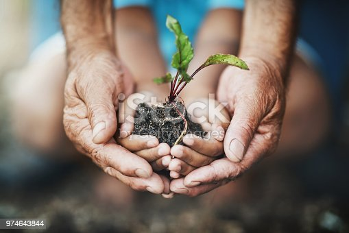 Closeup shot of an adult and child holding a plant growing out of soil