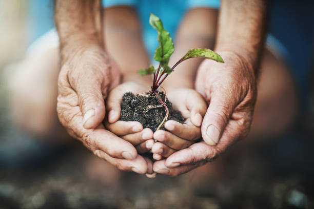 Teach kids how far a little care can go Closeup shot of an adult and child holding a plant growing out of soil environment stock pictures, royalty-free photos & images