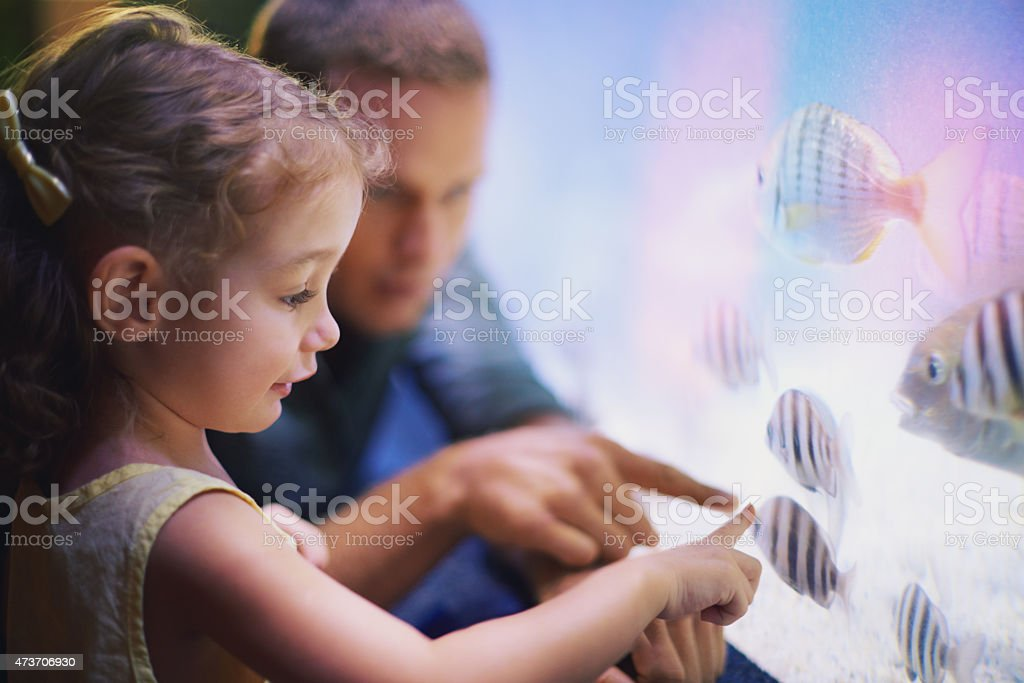 Teach your child to love and respect animals stock photo