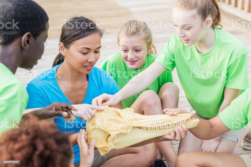 Des enseignants et des enfants examine le modèle de tête de Dauphin - Photo