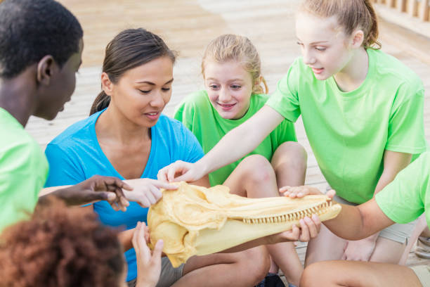 lehrer und kinder untersuchen modell der delphin-kopf - vorschulzoothema stock-fotos und bilder