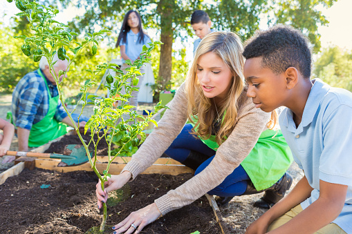 Mid adult Caucasian woman is teaching elementary school class during field trip at farm. Teacher and elementary age African American little boy are planting a vegetable plant in garden. Farmer and diverse classmates are gardening in background. Students are wearing private school uniforms.