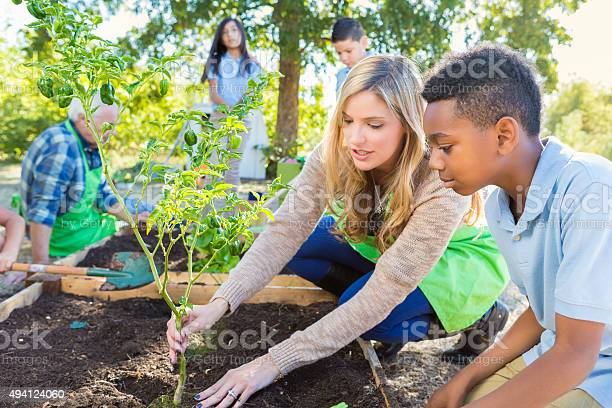 Teacher And Student Working In Garden During Farm Field Trip Stock Photo - Download Image Now