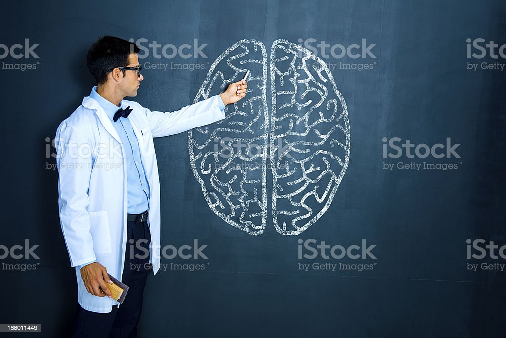 Teacher explaining human brain stock photo