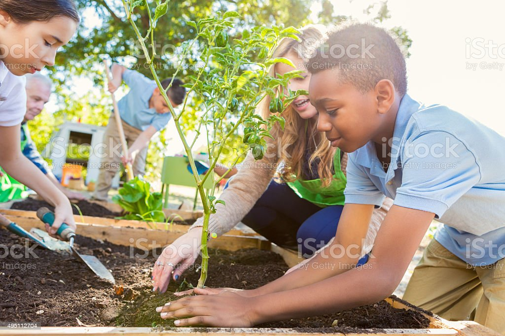 Teacher instrucing students while gardening during science class stock photo