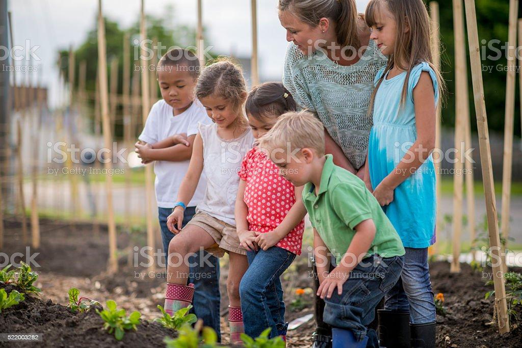 Teacher Showing Children How to Garden stock photo