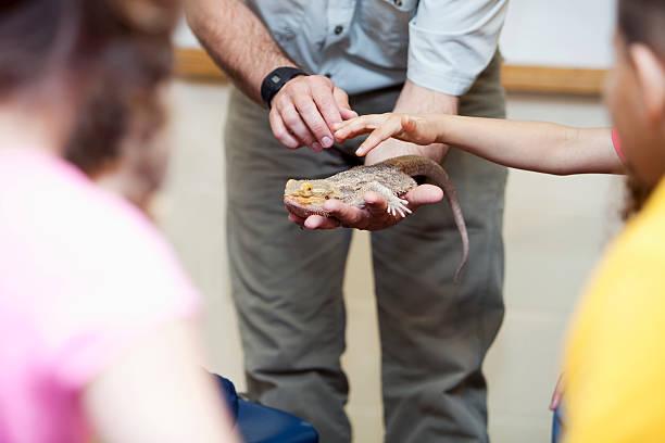 교사 표시중 파충류 학생 - 파충류 뉴스 사진 이미지