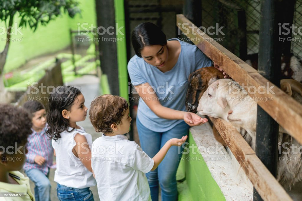 Teacher with a group of young students at an animal farm stock photo