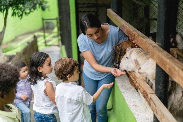 Teacher with a group of young students at an animal farm Latin American teacher with a group of young students at an animal farm feeding the goats - lifestyle concepts field trip stock pictures, royalty-free photos & images