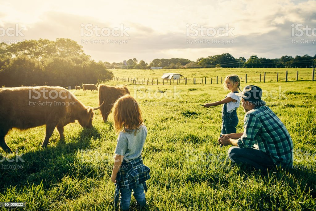 Teaching them how to care for cattle stock photo