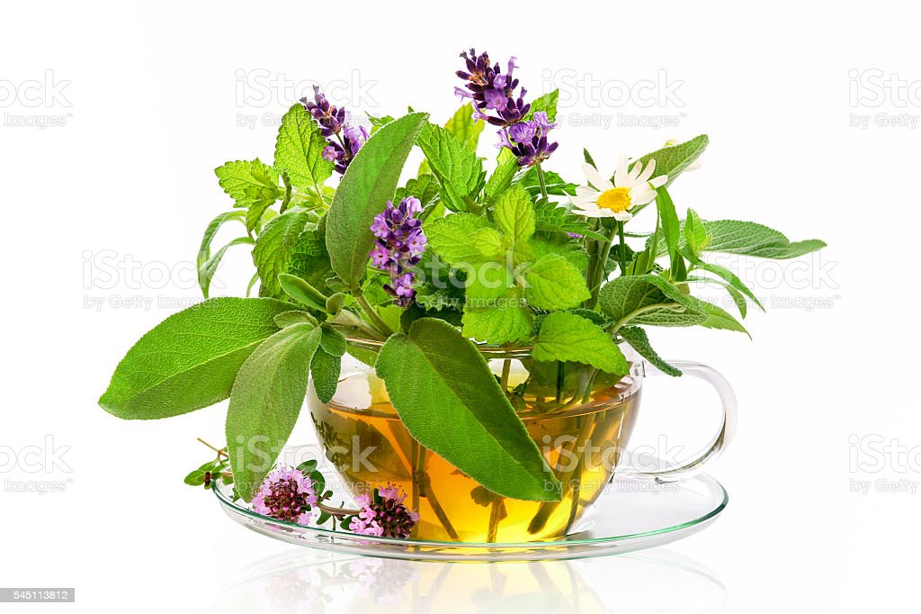 Teacup with fresh healing herbs stock photo