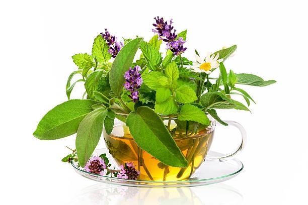 teacup with fresh healing herbs - menta erba aromatica foto e immagini stock
