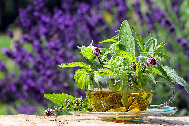 Teacup with fresh healing herbs Different fresh medical plants with a cup of tea in the garden thyme photos stock pictures, royalty-free photos & images