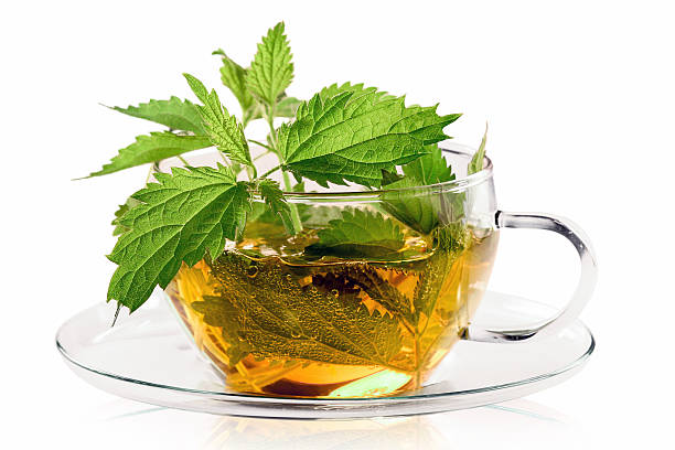 Teacup with fresh stinging nettle tea Fresh nettle plants with a cup of tea, isolated. stinging nettle stock pictures, royalty-free photos & images
