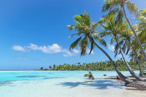 Teahatea, the beautiful, untouched natural blue - turquoise - green lagoon and natural beach in the UNESCO Nature Biosphere Reserve with tropical palm treea like 'made for a postcard'. Fakarava Atoll Island, UNESCO Biosphere Reserve, Tuamotu Islands Archipelago, French Polynesia.