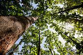 チーク材の森の天蓋付きです。