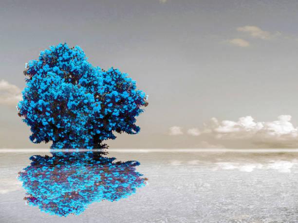 surface de l'eau des nuages ciel de la réflexion fleur du lac de couleur sarcelle - lac mirror lake photos et images de collection