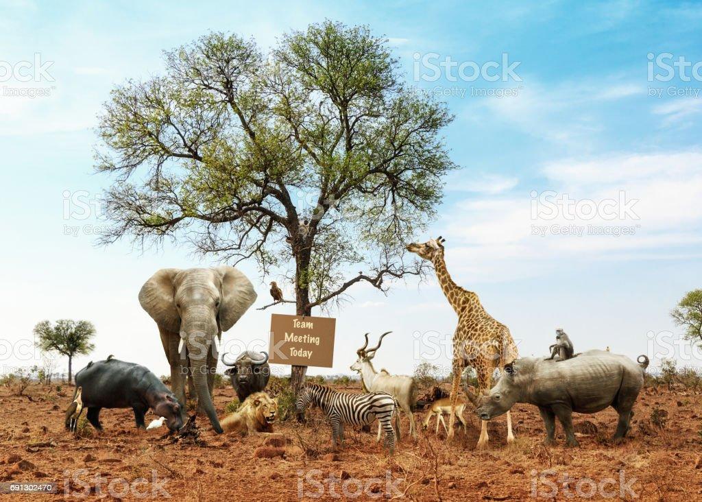 サファリ動物の多様なグループとチーム会議 ストックフォト