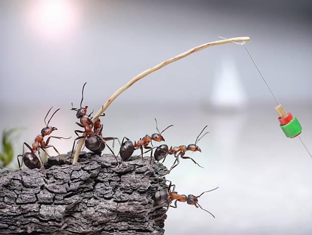 team von Ameisen Angler Angeln, Teamarbeit – Foto