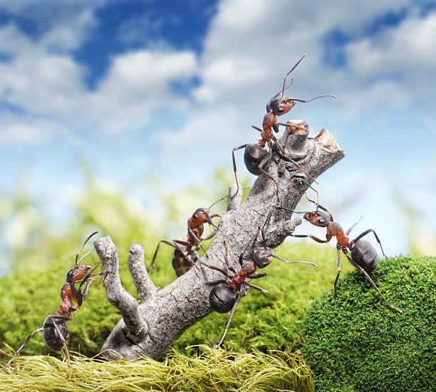 team von Ameisen und Baum, teamwork concept – Foto