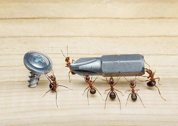 team von Ameisen mit Schraubendreher und Schraube – Foto