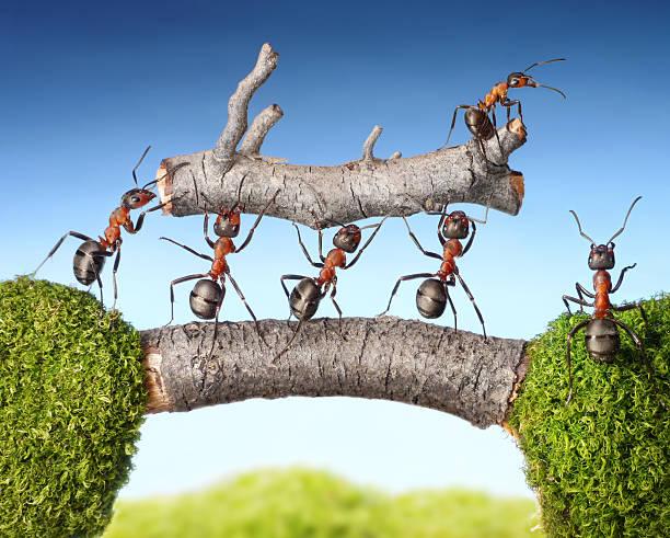 team von Ameisen tragen Protokoll auf Brücke, Teamarbeit – Foto