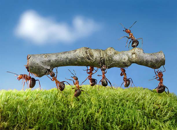 team von Ameisen tragen Protokoll auf das mit Indianermotiv – Foto