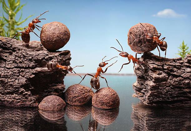 Team von Ameisen bauen Damm, Teamarbeit – Foto