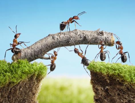 team of ants constructing bridge on sunny day, teamwork concept