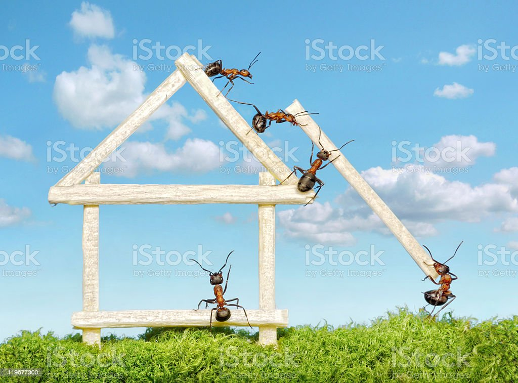team of ants constructing wooden house stock photo