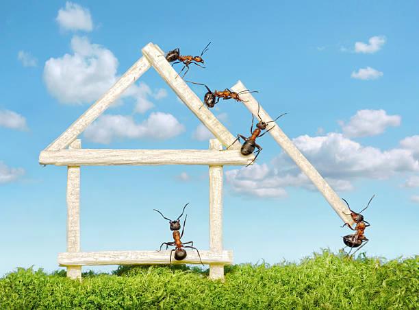 team von Ameisen Aufbau wooden house – Foto